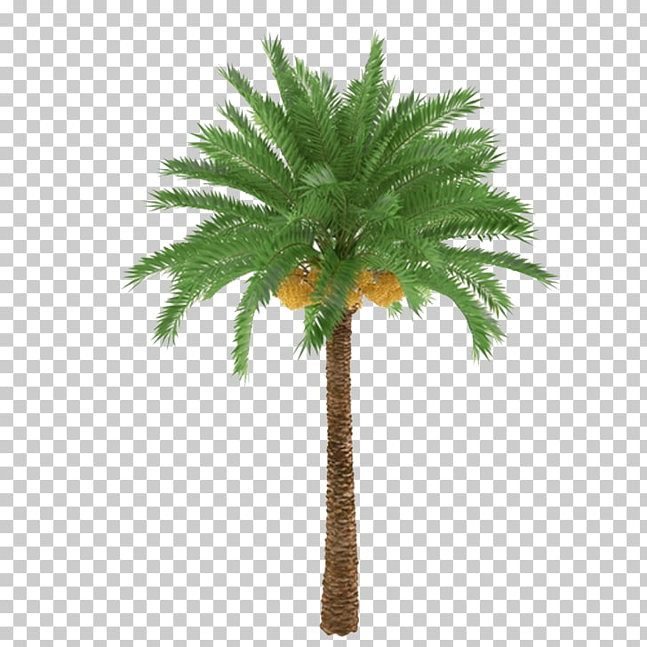 African oil palm Arecaceae Tree Trunk Plant, Palm trees and.