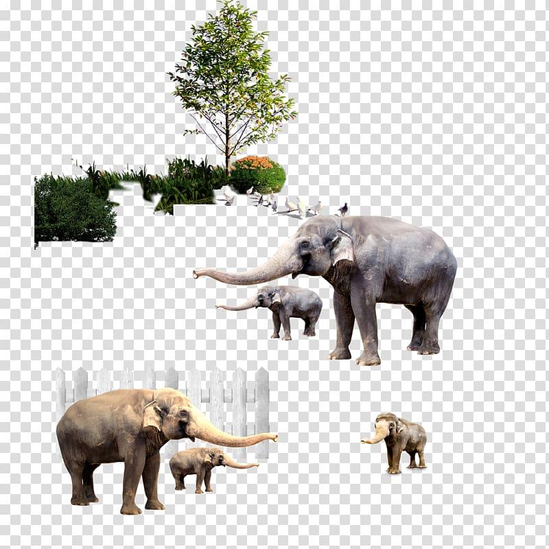 Indian elephant African elephant Zebra, Big nose like.