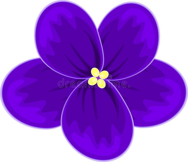 African Violets Stock Illustrations.
