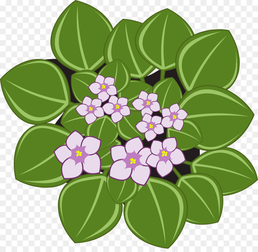 African violets Clip art Openclipart African Violet Society of.