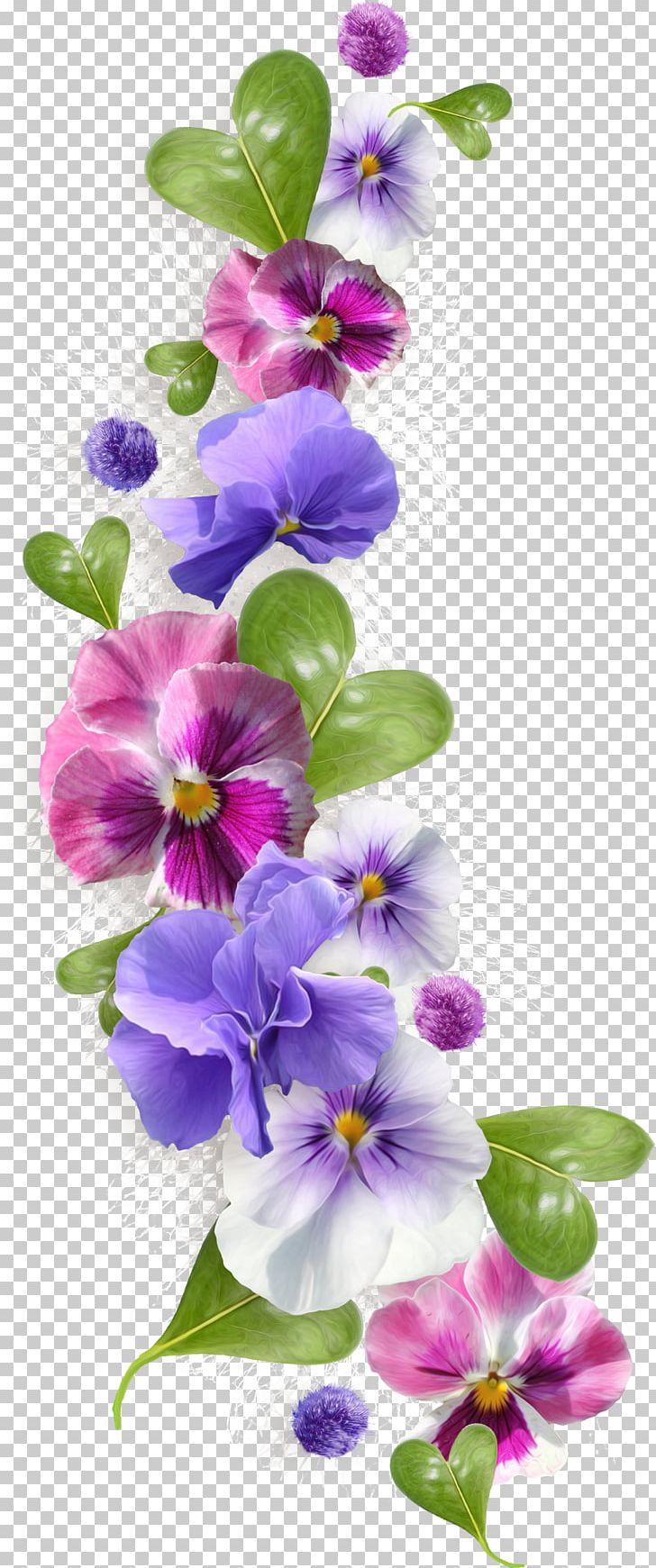Sweet Violet Pansy African Violets PNG, Clipart, African Violets.