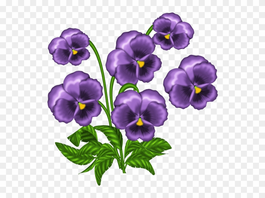 African Violets Clipart.