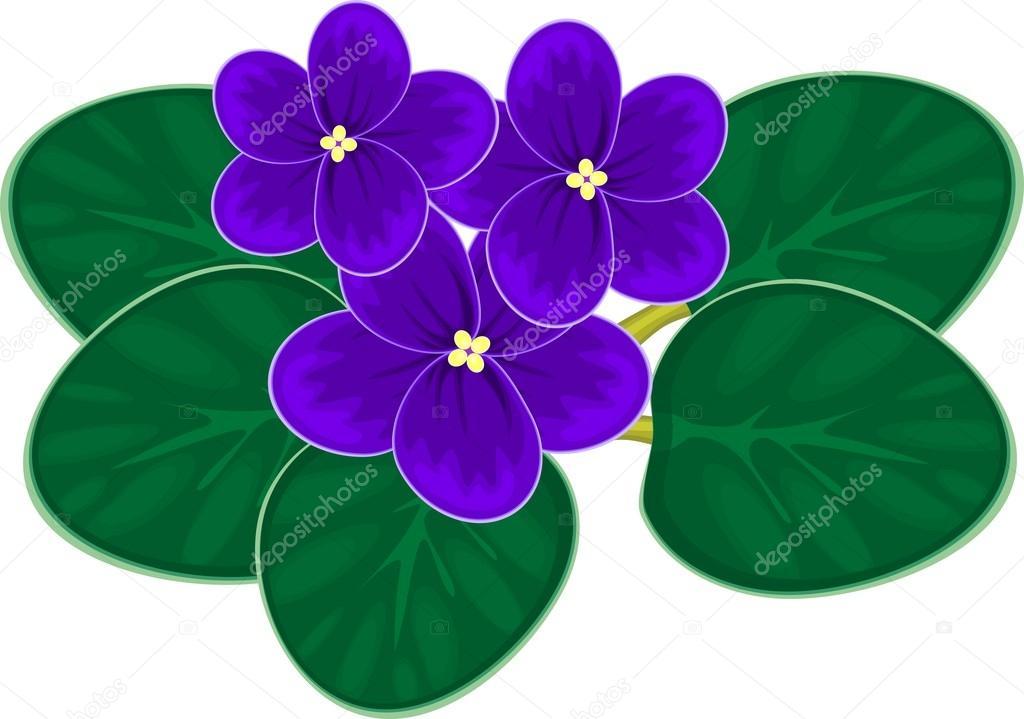 African violets (saintpaulia) — Stock Vector © mariaflaya #93695992.