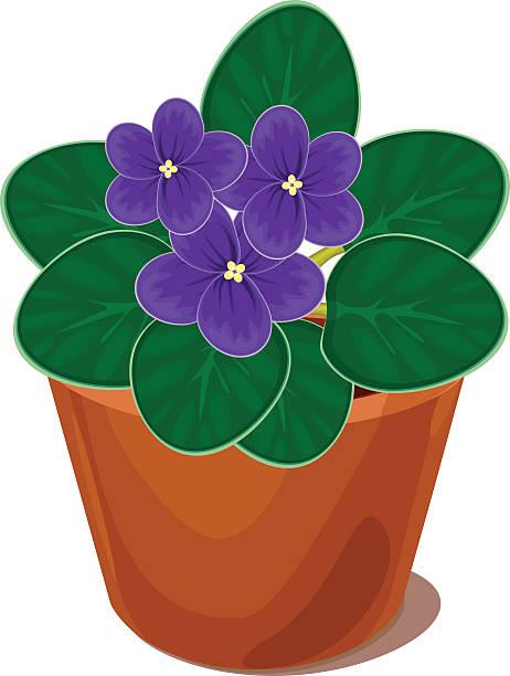 Best African Violet Illustrations, Royalty.