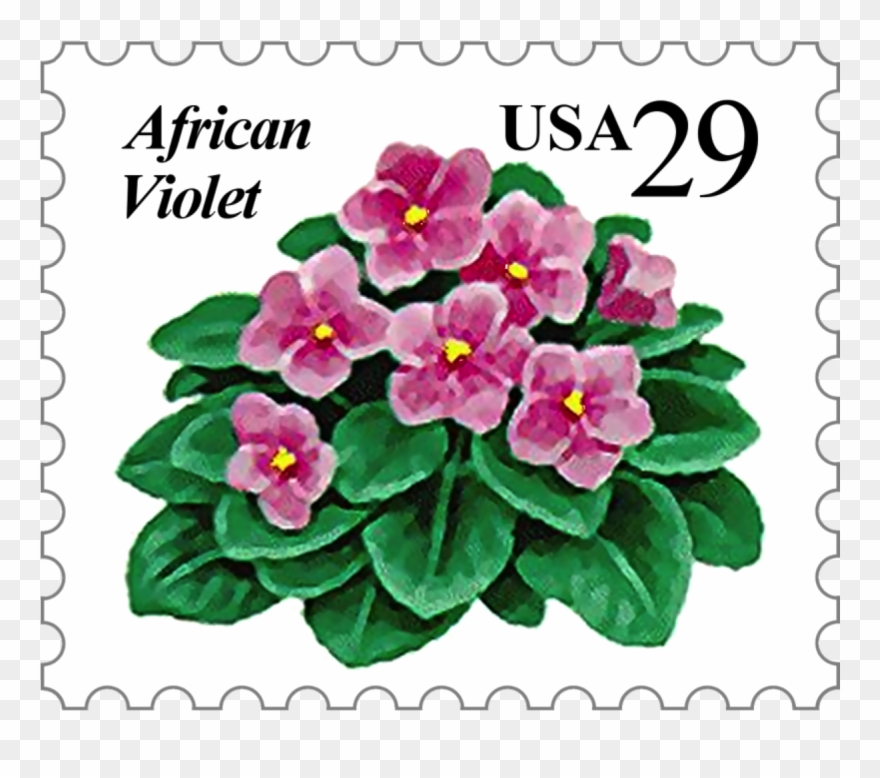 Offered By The African Violet Society Of America, Inc.