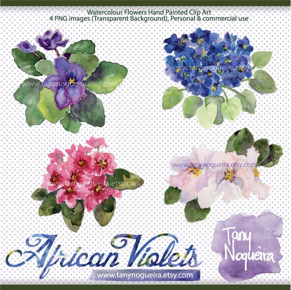 African Violets clip art images watercolor hand painted purple.