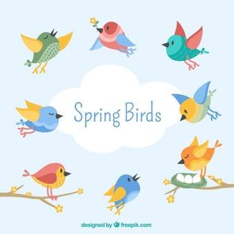 Bird Vectors, Photos and PSD files.