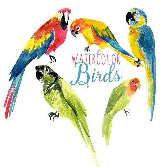1000+ ideas about Tropical Birds on Pinterest.