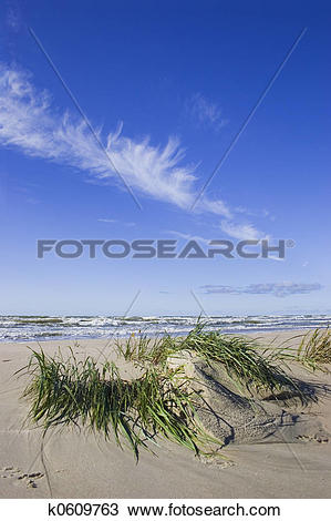 Stock Photo of Seagrass after storm k0609763.