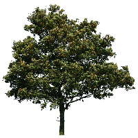 Download Tree Free PNG photo images and clipart.