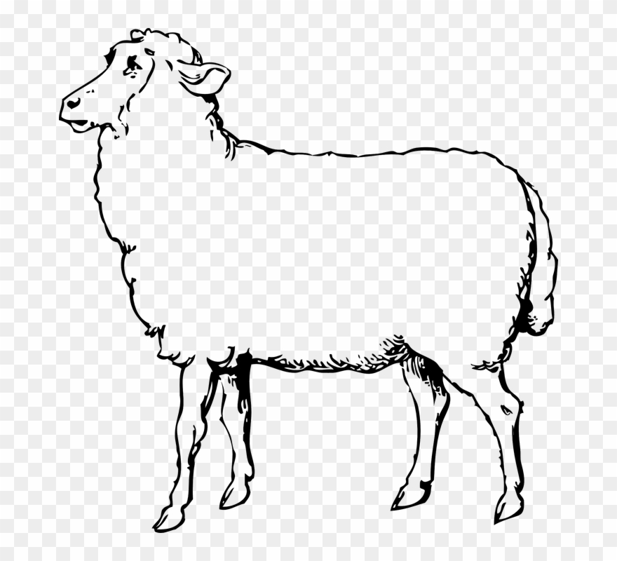 Clipart, Sheep Clipart Black And White Free Image On.