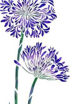Exquisite large 2 sheet flower stencil The Large Agapanthus.