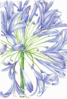 Delphiniums' Luxury Floral Card by Rose Eddington, features.