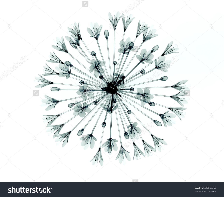 Xray Image Flower Isolated On White Stock Illustration 329856302.