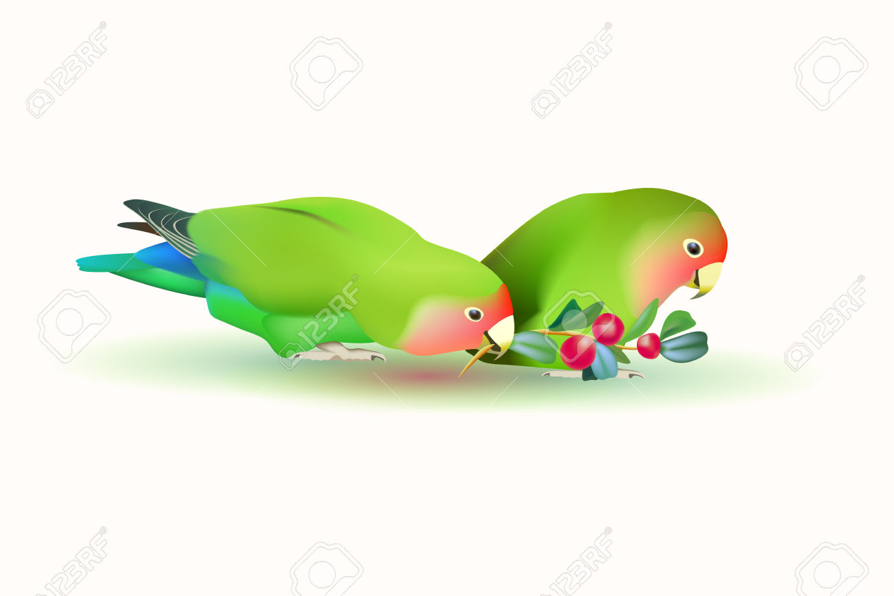 Lovebirds Agapornis Fischeri . Two Small Parrots Isolated On.