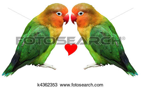 Stock Photo of Loving bird agapornis.