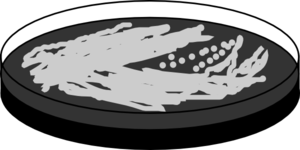 Legionella Black Agar Clip Art at Clker.com.