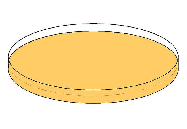 Empty Agar Plate.