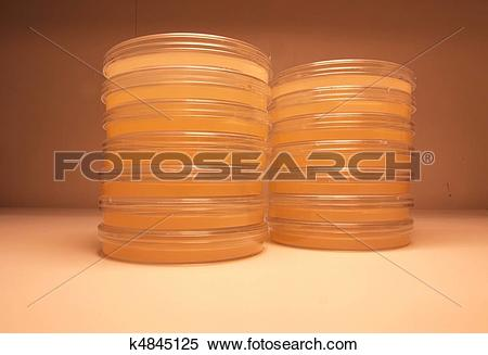 Stock Illustration of Laboratory plates of agar k4845125.