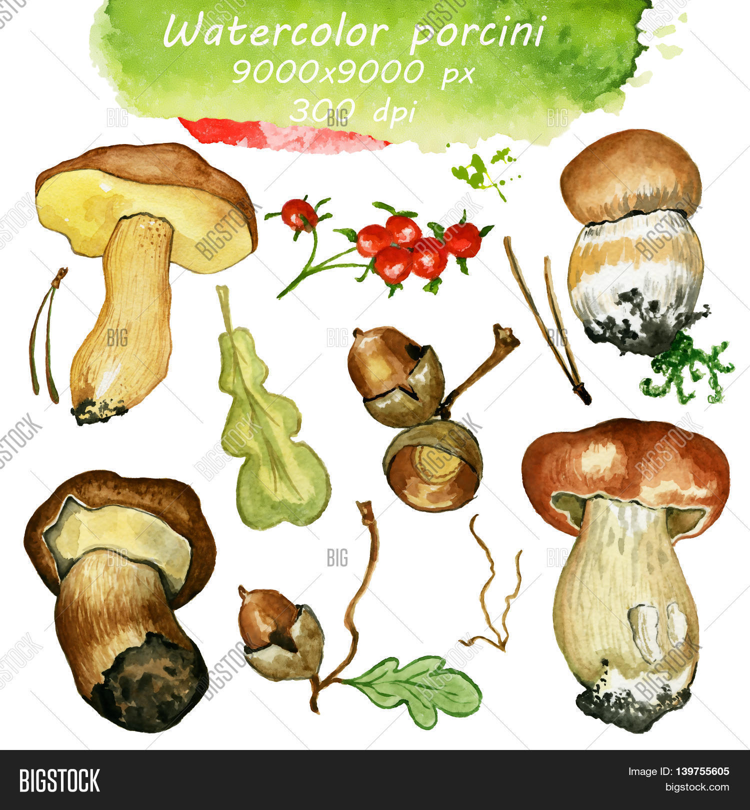 Wild mushrooms. Hand drawn watercolor painting isolated over white.