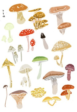 1000+ images about Fungus Amongus on Pinterest.