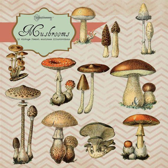 French Mushroom Illustrations, digital clip art and photoshop.