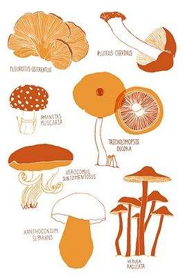 1000+ images about Wild edible mushrooms on Pinterest.