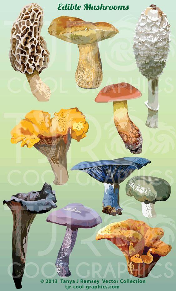 Edible Mushrooms Digital Realistic Clip Art, PNG, Printable.
