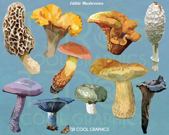 Edible mushrooms, Mushrooms and Clip art on Pinterest.