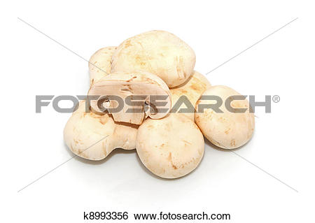 Stock Images of Agaricus bisporus k8993356.