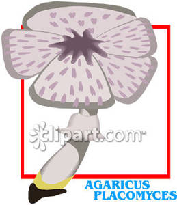 Agaricus_Placomyces_Mushroom_Royalty_Free_Clipart_Picture_081220.