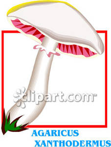 Agaricus_Xanthodermus_Mushroom_Royalty_Free_Clipart_Picture_081219.