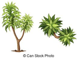 Agavaceae Clipart Vector and Illustration. 3 Agavaceae clip art.