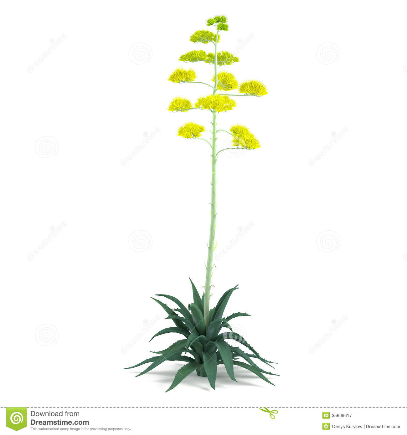 Plant Bush Isolated. Agave Americana Royalty Free Stock.