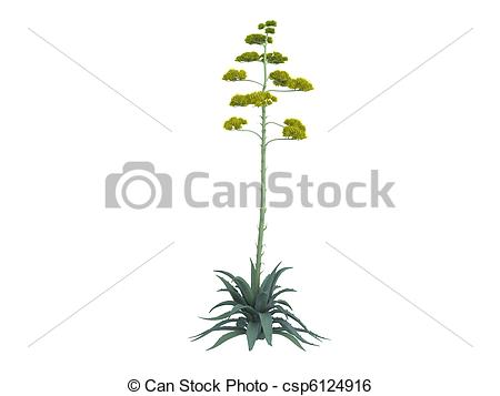 Agave Illustrations and Clip Art. 478 Agave royalty free.