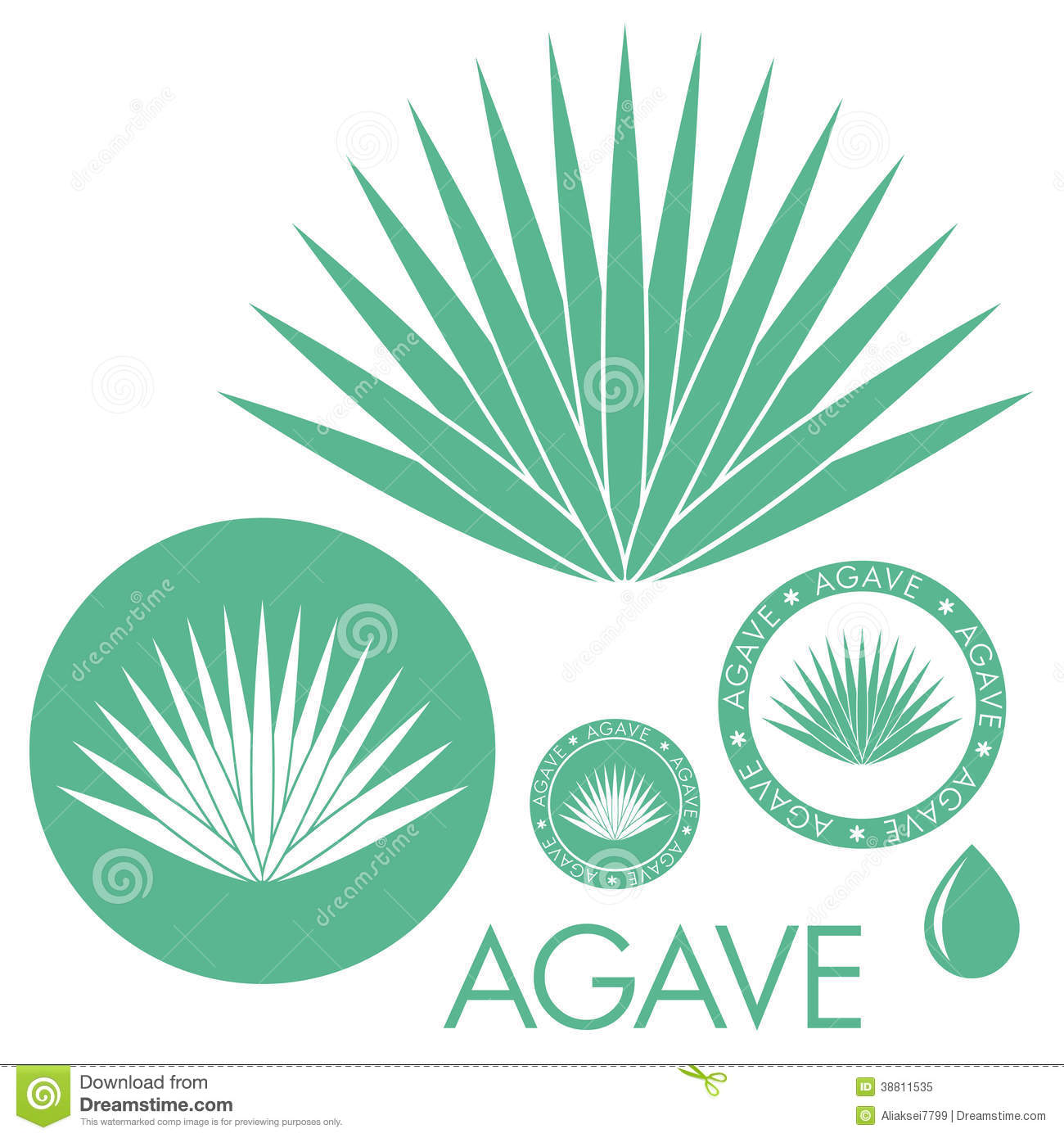 Agave Stock Illustrations.
