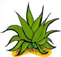 Free Agave Cactus Clipart.