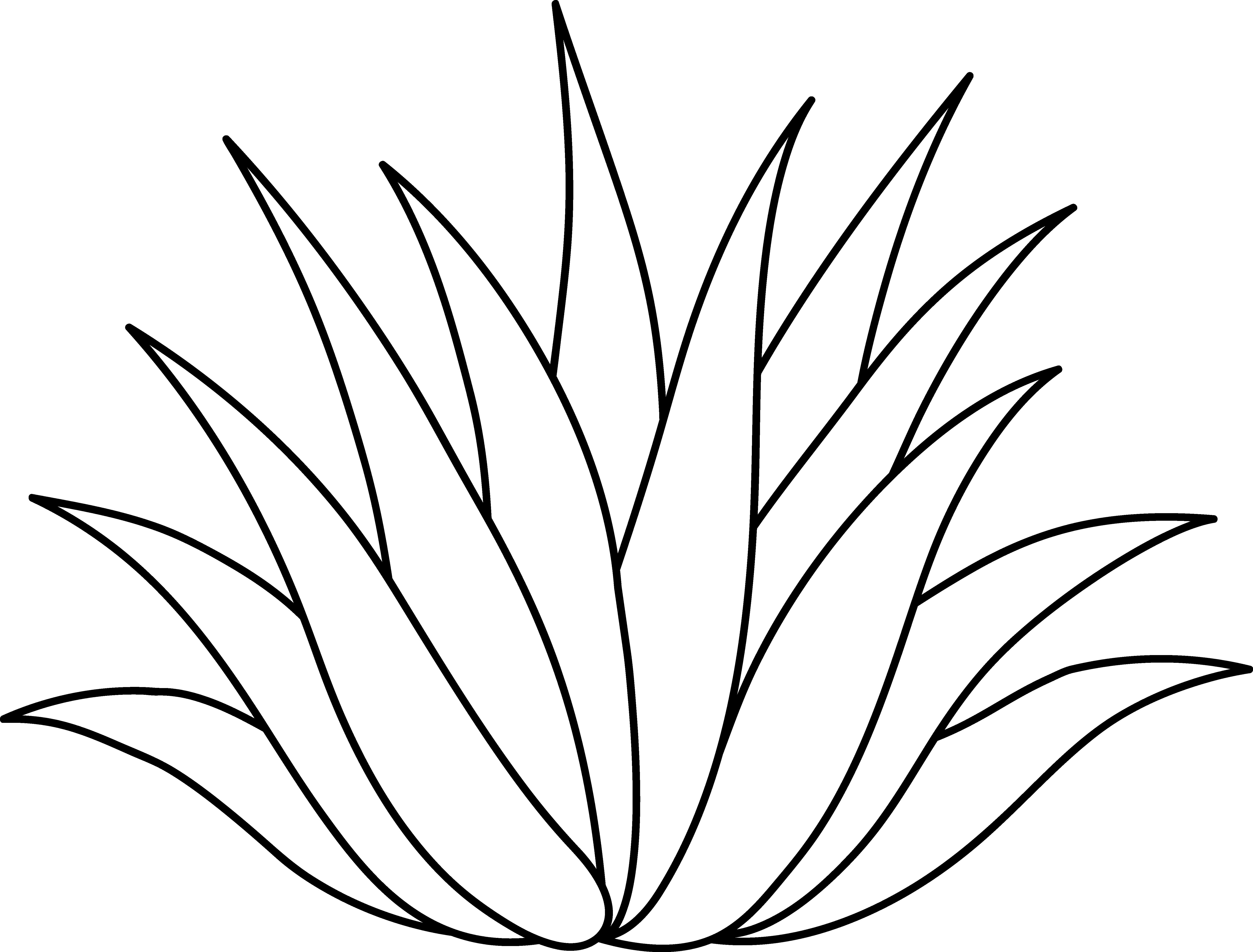 Agave or Aloe Plant Line Art.