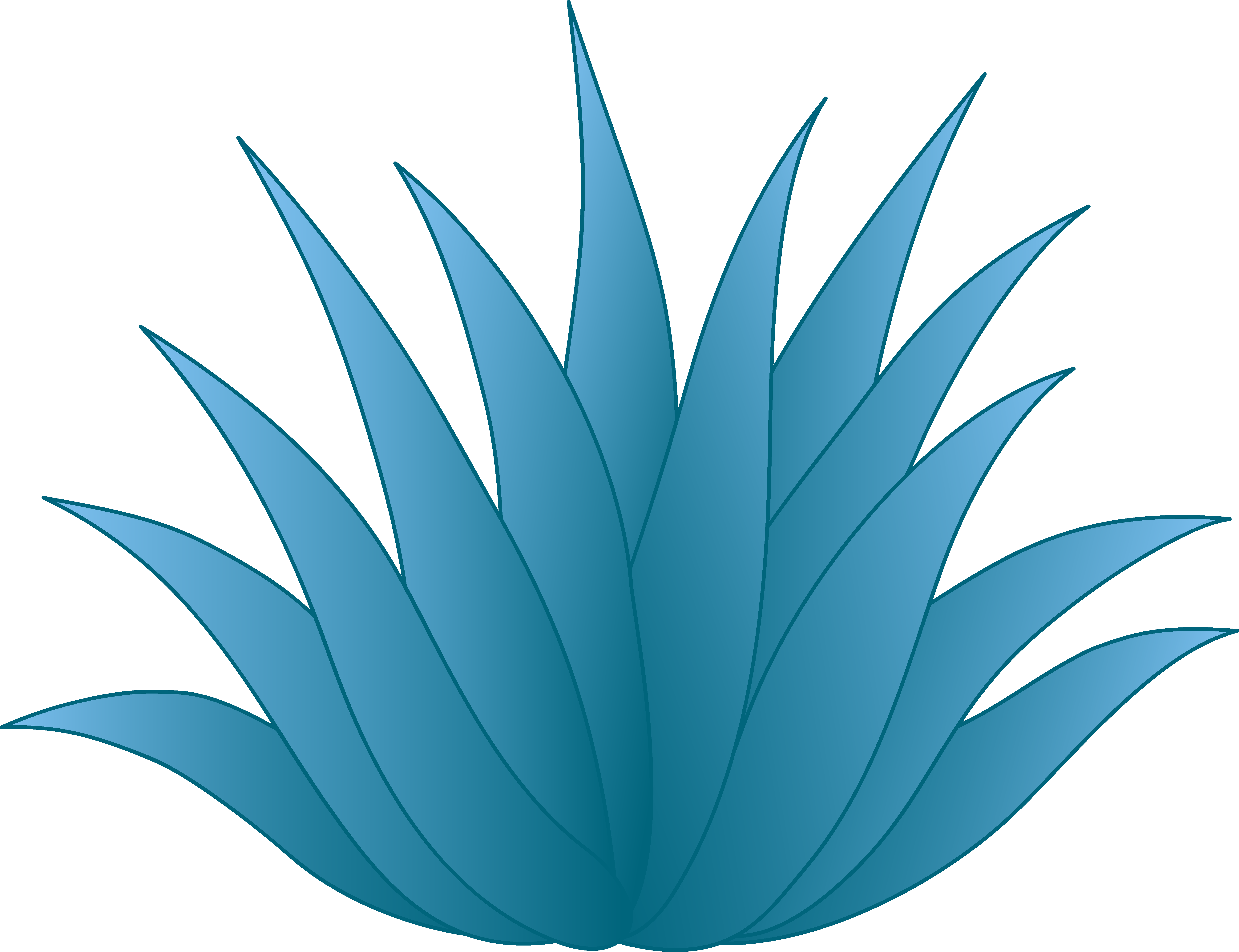 Agave plant clipart.