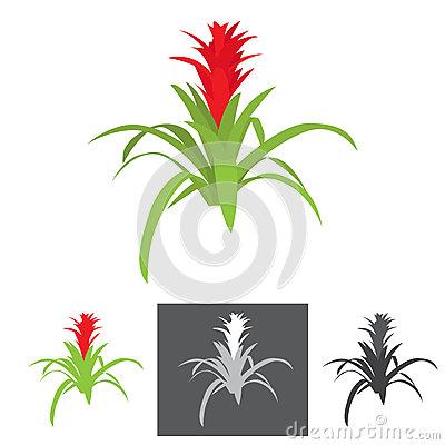 Flower Agave Plant Stock Illustrations.