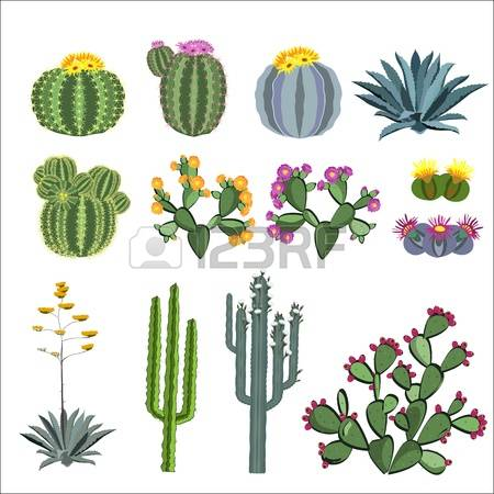 205 Blue Agave Cliparts, Stock Vector And Royalty Free Blue Agave.
