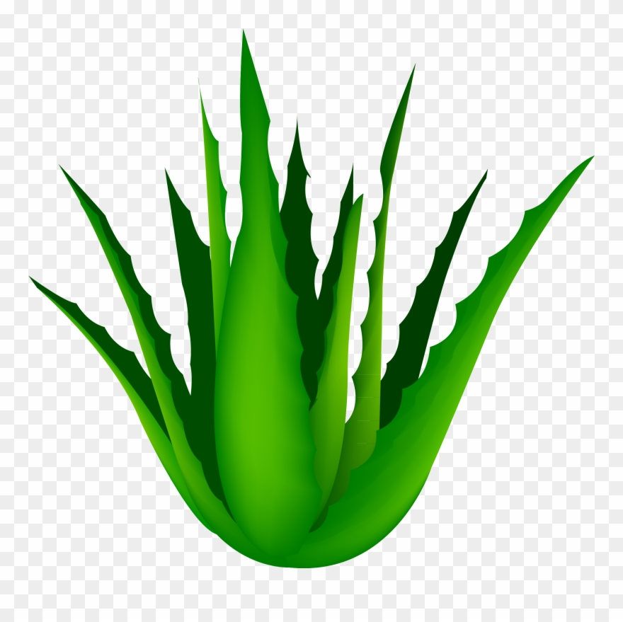 Clip Art Free Agave Vector Cartoon.