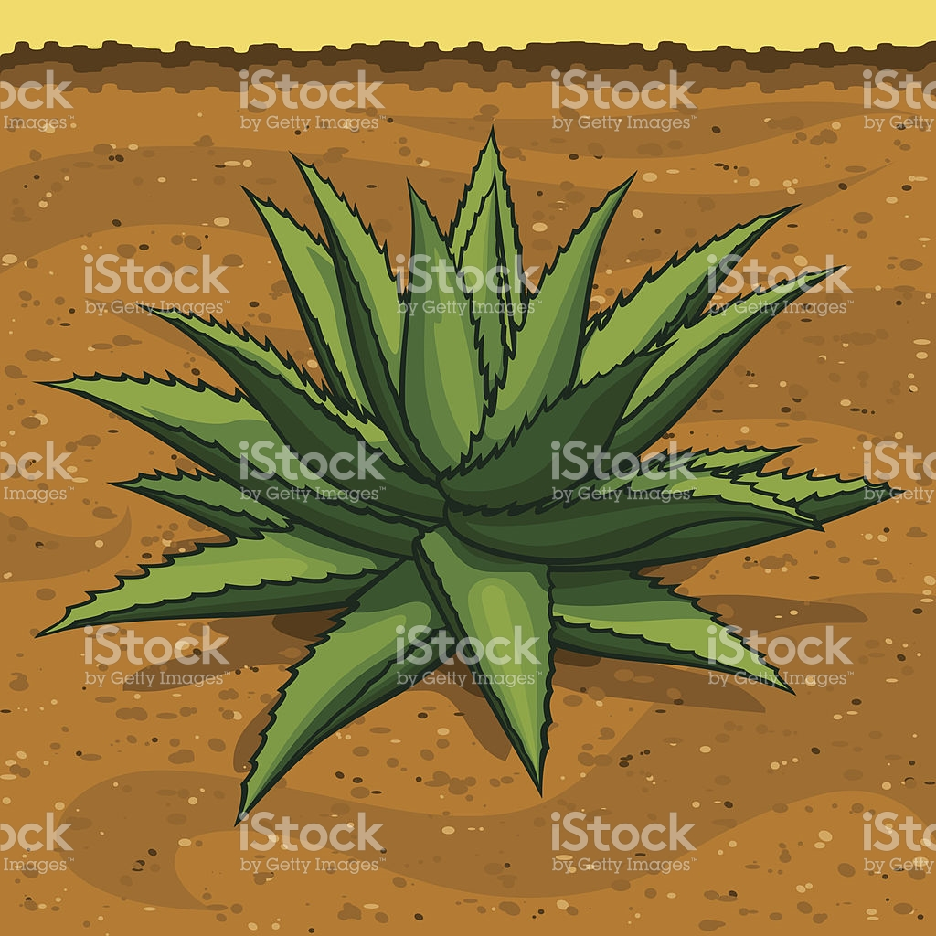 Blue Agave Clip Art, Vector Images & Illustrations.