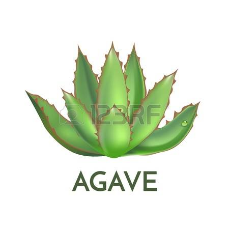 287 Agave Tequila Stock Illustrations, Cliparts And Royalty Free.
