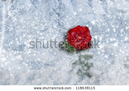 "Elle Arden Images's ""Seasonal"" set on Shutterstock."