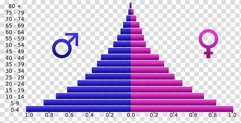 Population pyramid Demographic transition Population Age.