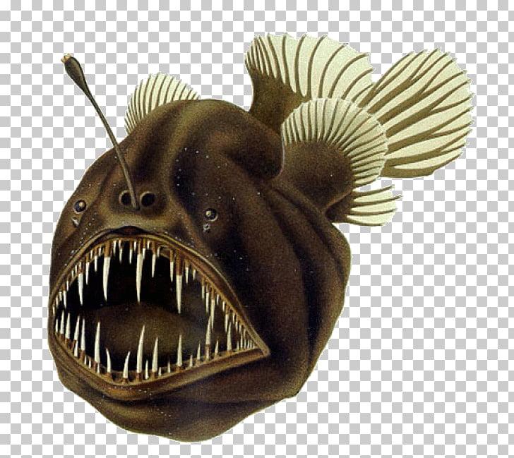 Black seadevil Humpback anglerfish Deep sea fish, benthic.