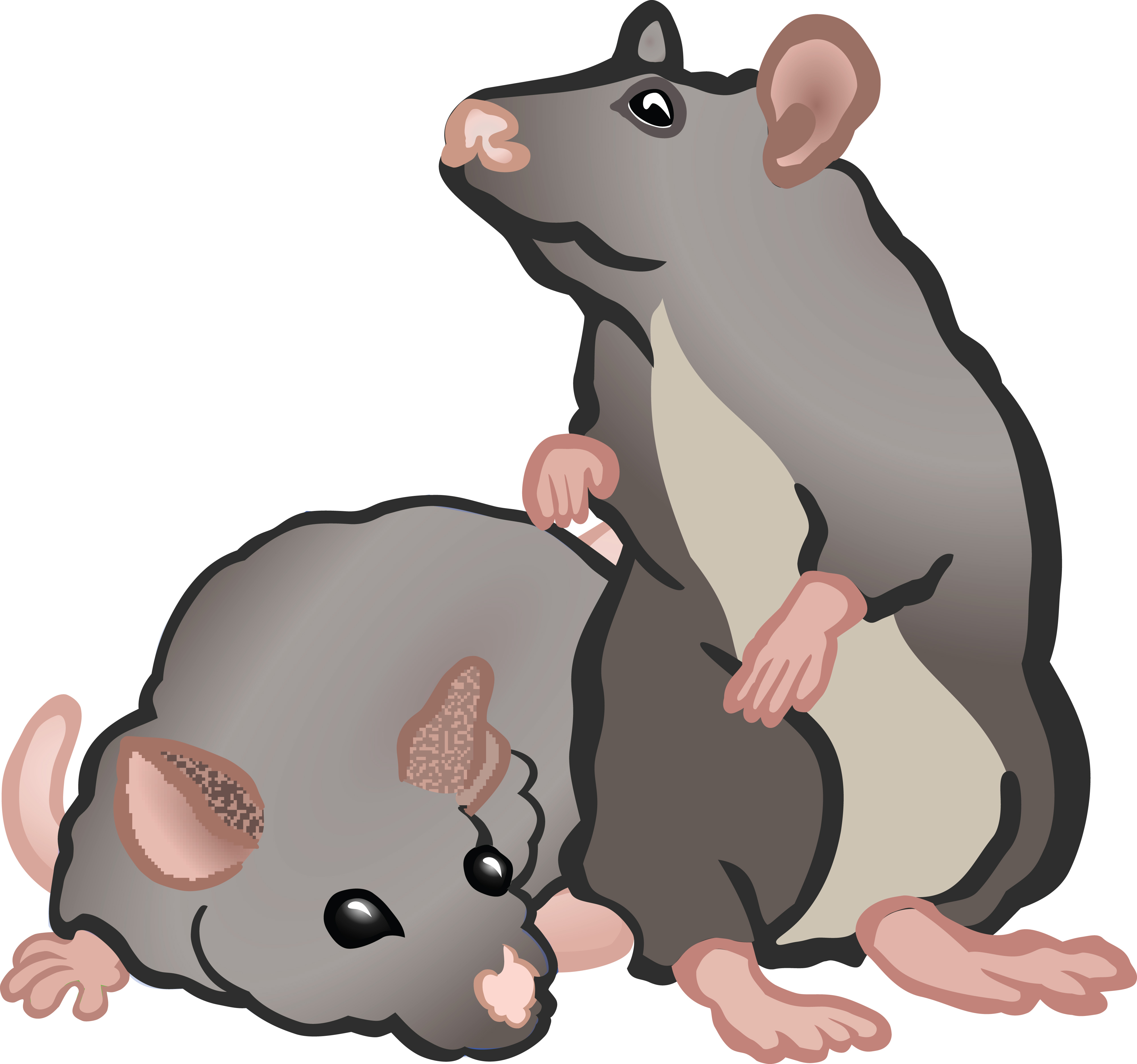 Ageless Suggestions Rats Clip Art 2019.