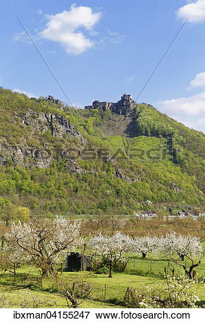 Picture of Aggstein castle ruins, blossoming fruit trees.