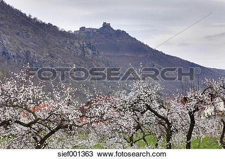Stock Photo of Austria, Lower Austria, Wachau, View of Aggstein.